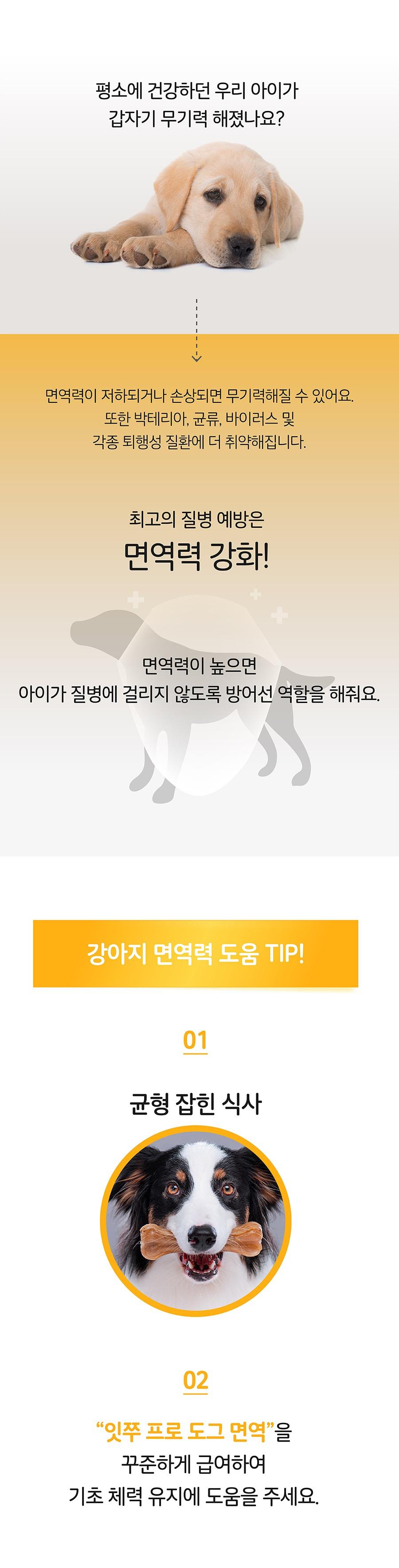 it 잇쭈 프로 도그 면역 (8개입)-상품이미지-2